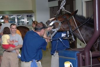 Delmarva Equine Dentistry, Chase City, VA. 75 likes · 3 talking about this · 1 were   here.