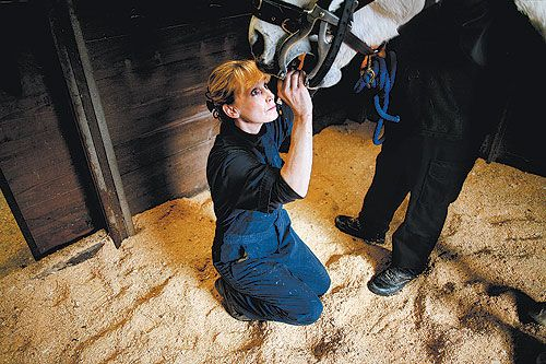 An International Association of Equine Dentistry certified EDT, has been   practicing in Southeastern Virginia for 21 years, providing dentistry for over   35,000